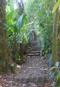 CostaRicaTrees